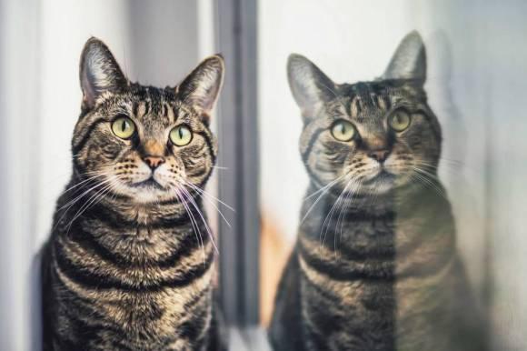 Fotos de gatos 10