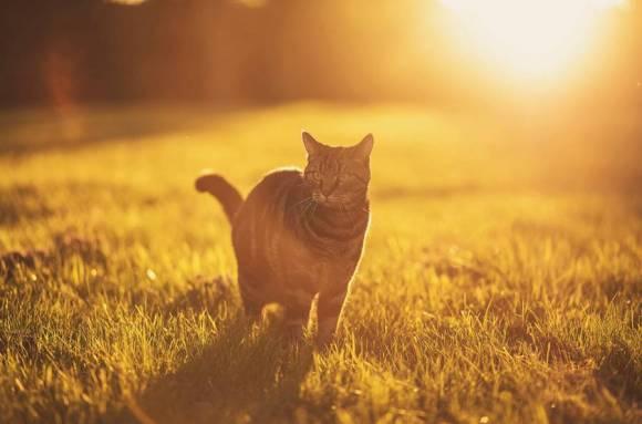 Fotos de gatos 6