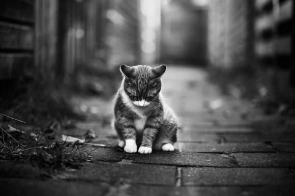 Fotos de gatos 7