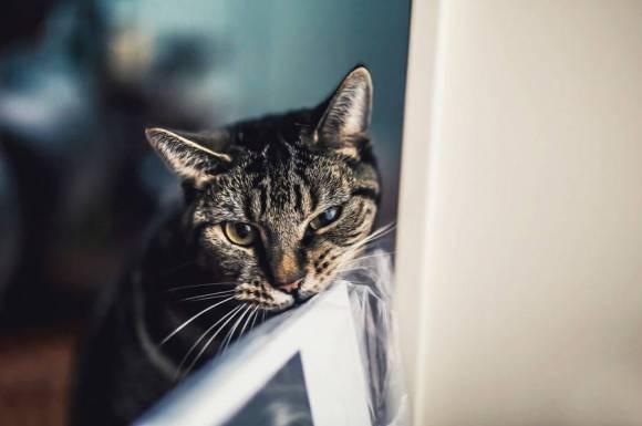 Fotos de gatos 9
