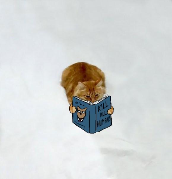 Desenhos sobre a foto de um gato 12 - Corinna Schlachter