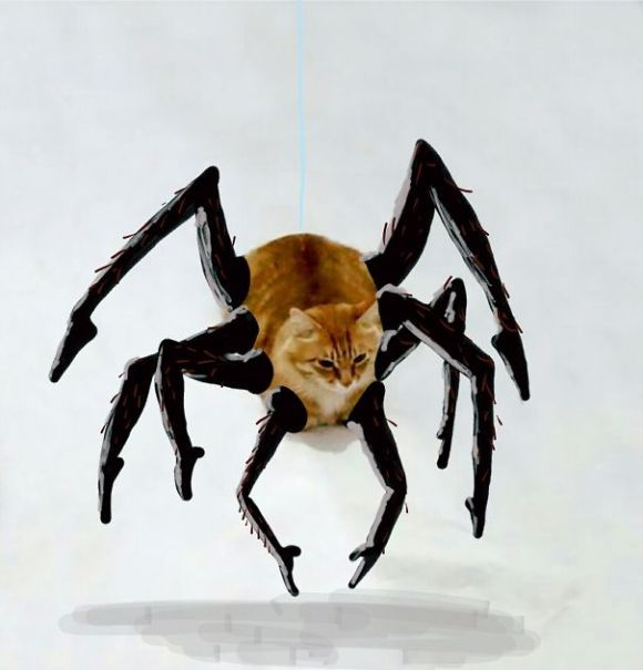 Desenhos sobre a foto de um gato 19 - Kelly Sweany