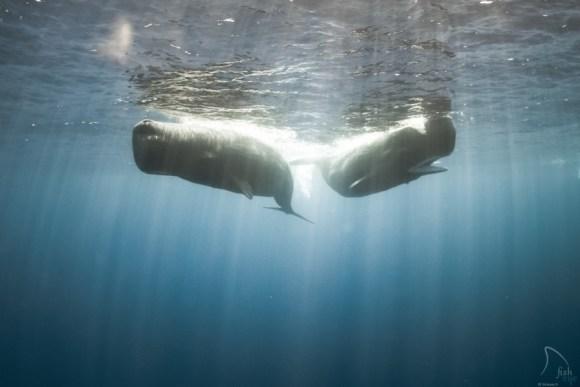 Mergulhando com baleias 11