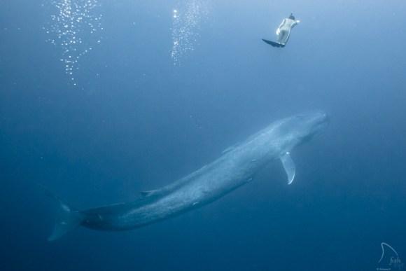Mergulhando com baleias 15