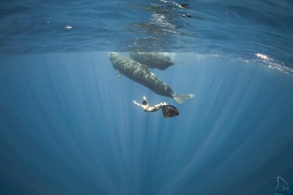 Mergulhando com baleias 8