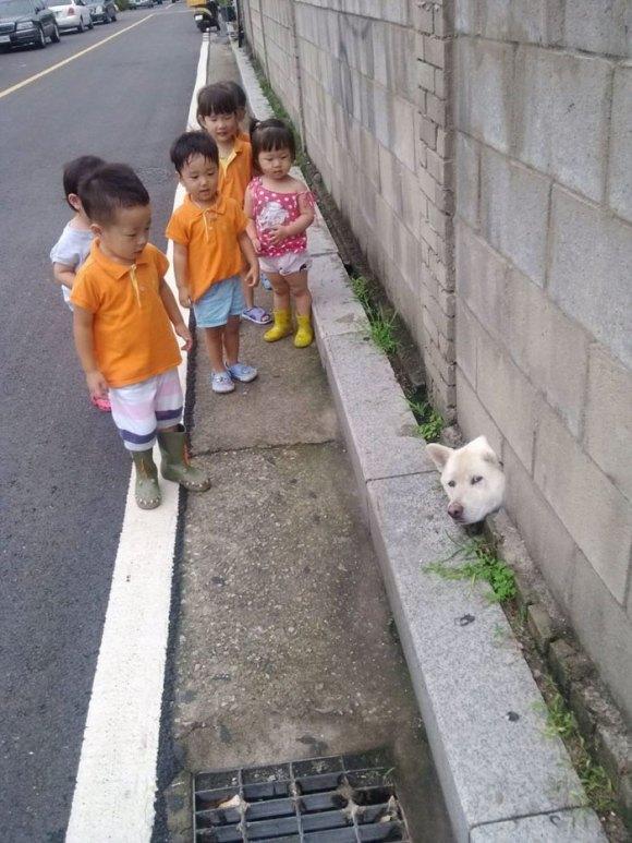 Cachorros que gostam de olhar a rua 15