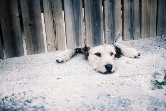 Cachorros que gostam de olhar a rua 17