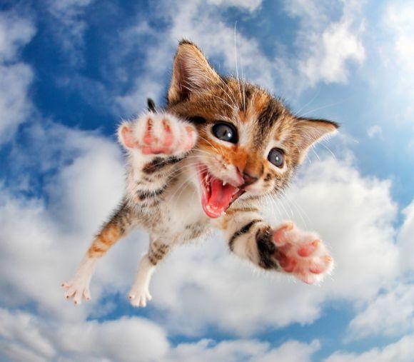 filhotes-de-gato-7
