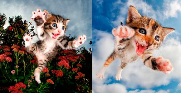 Com gatinhos atacando, essa talvez seja a série de fotos mais fofa do mundo