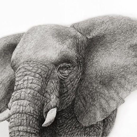 Elefante pronto