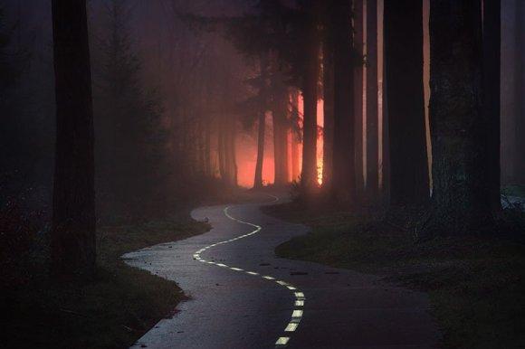 Estrada tortuosa com árvores altas ao longo dela e céu vermelho
