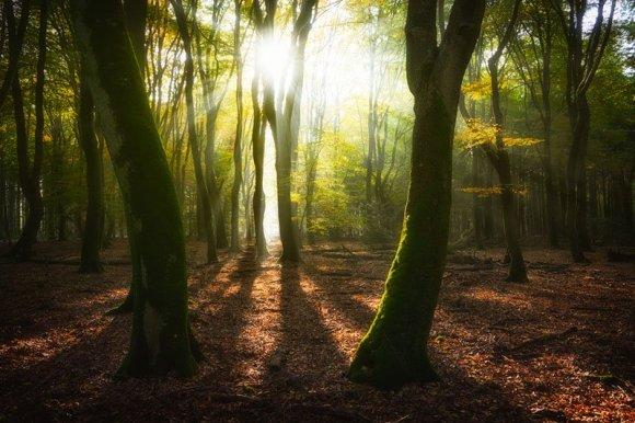 Sol entre árvores verdes