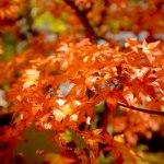 京都哲学の道・永観堂へ紅葉を見に行ってきました!~後編~