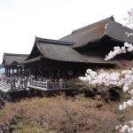 桜の見頃時期に京都清水寺・高台寺へお花見へ行ってきました【前編】