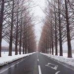 メタセコイア並木道の冬の現在の見頃やアクセス、ランチに駐車場は?滋賀県一の絶景スポットへ行って来たよ!