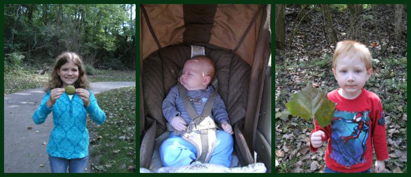 walnut leaf Collage