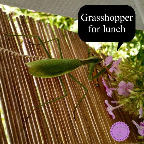 grasshopper lunch