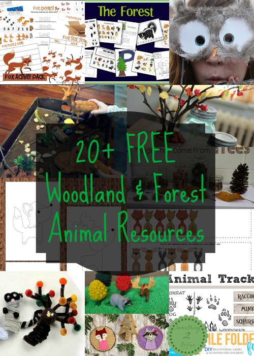 free woodland forest animal resources