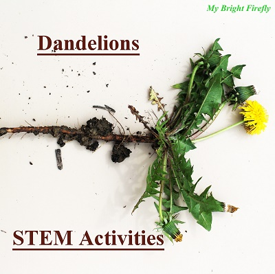 dandelion stem outdoor actvities