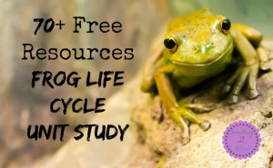 frog life cycle resources