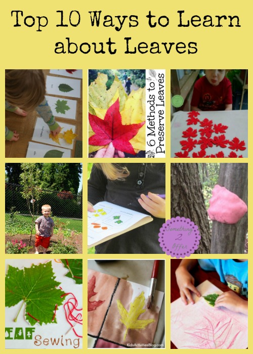 Top 10 Ways to Learn about Leaves