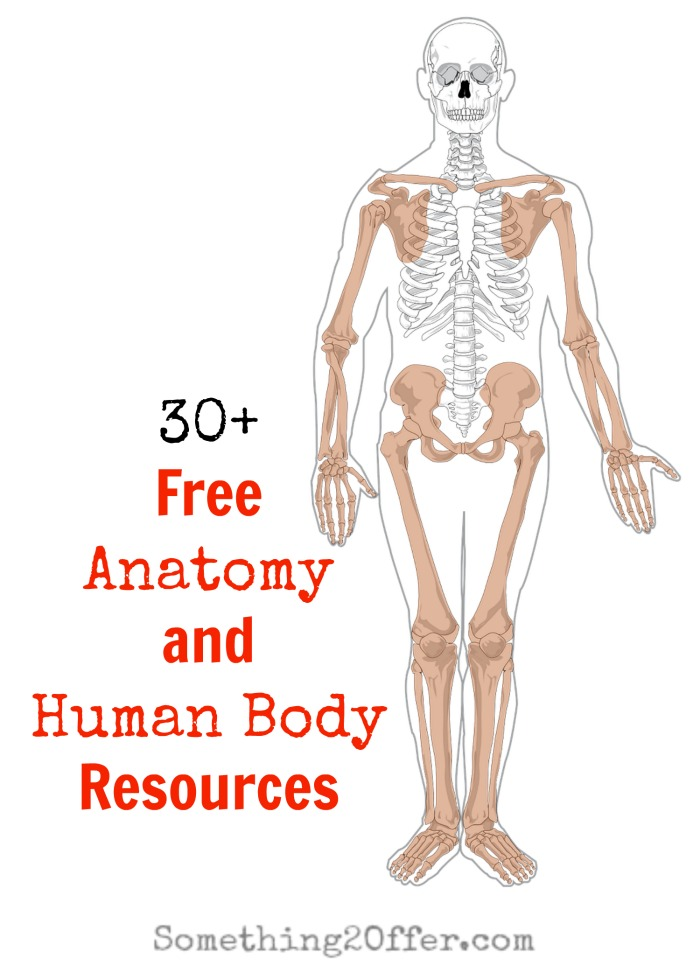 Free Anatomy And Human Body Resources