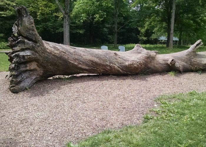 Engelwood Metropark Natural Play large tree