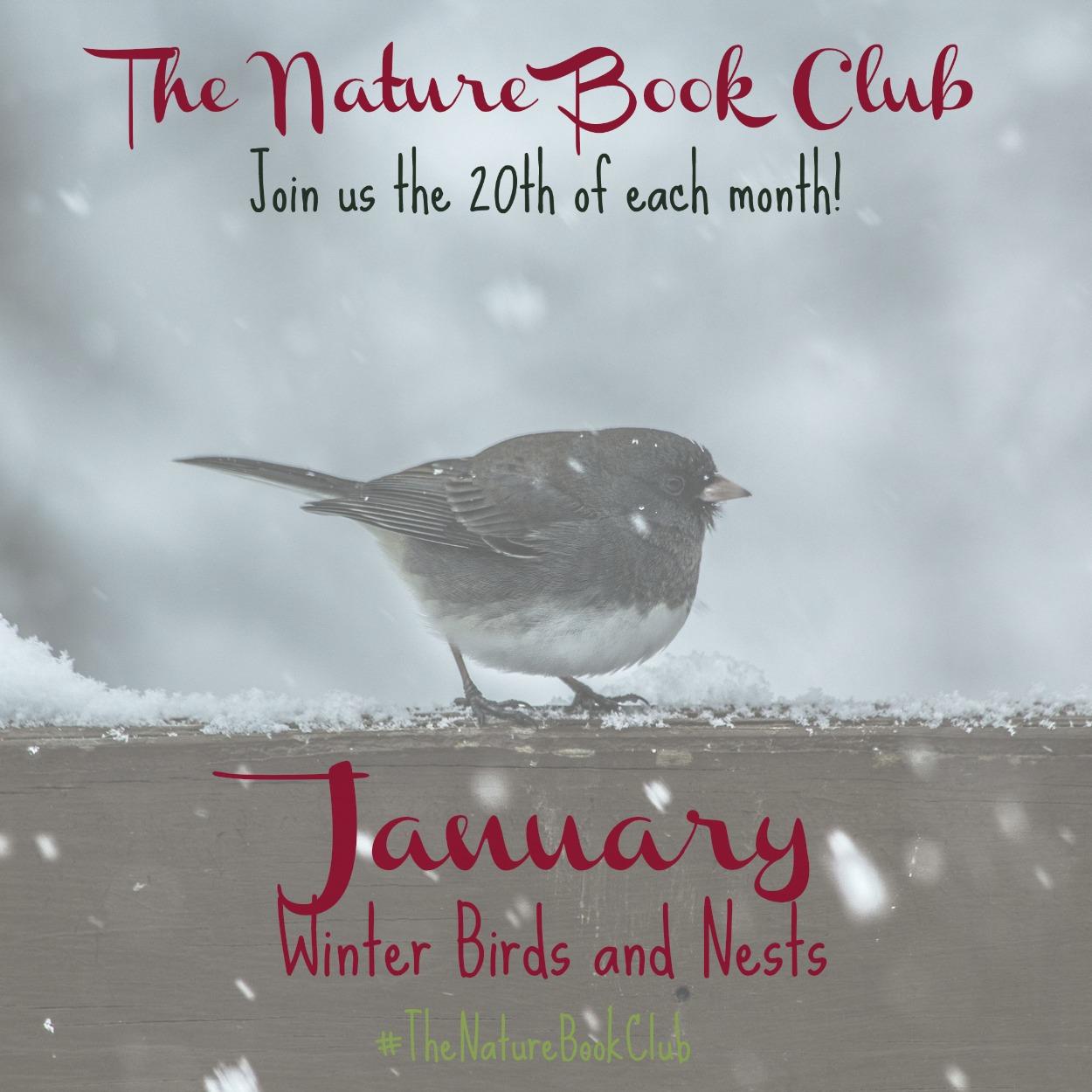 Winter Birds And Nests Scavenger Hunt Naturebookclub