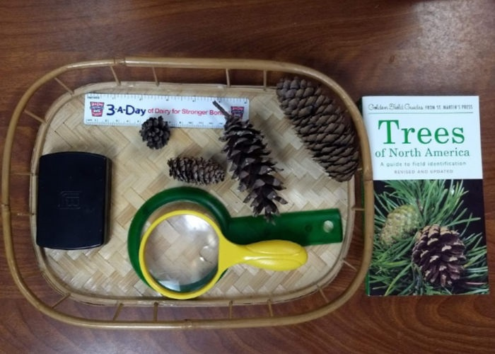 Pinecone Exploration Tray
