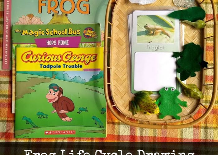 Frog Life Cycle Drawing and Frog Puppets #NatureBookClub #NatureStudy