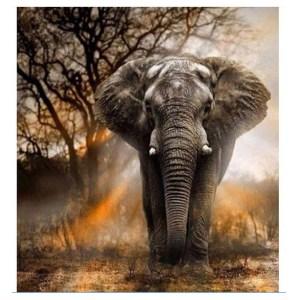 5D Diamond Painting Full Image Square Drills BIG ELEPHANT 40x50cm