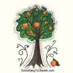 Orange Tree – Something to Cherish
