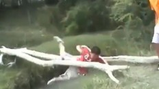 boy falls off of tree branch