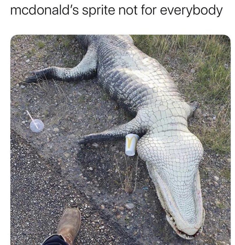McDonald's sprite is not for everybody alligator meme