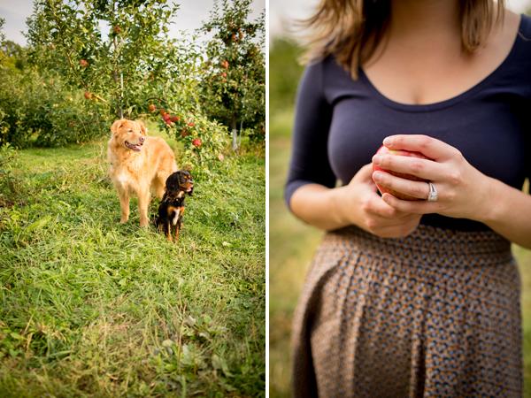 apple picking fall engagement shoot