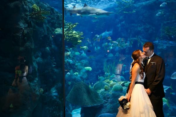 SomethingTurquoise_DIY_aquarium_wedding_Carrie_Wildes_Photography_0013.jpg