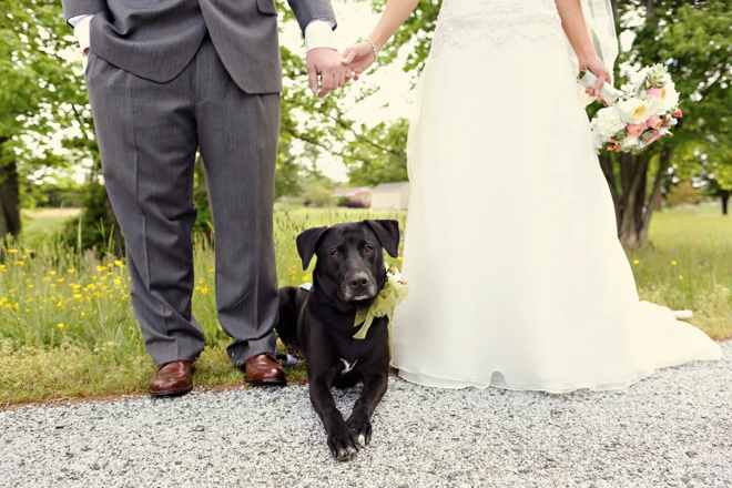 Darling dog in the wedding