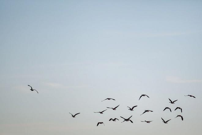 Birds flying in the morning