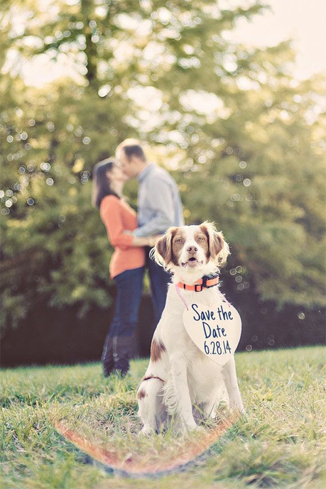 PET-SAVE-THE-DATE