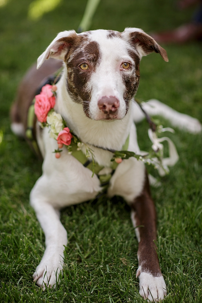 We're in LOVE with this Mr. and Mrs. darling pup!