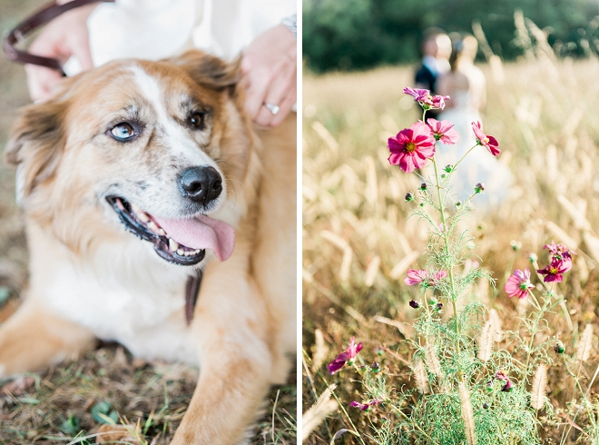 A Bride and her dog are our favorite wedding day accessory!