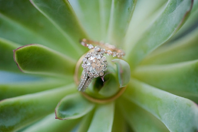Loving this stunning ring shot on a succulent!