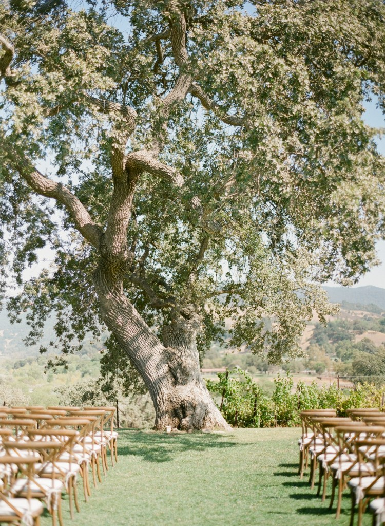 Wow.  What a venue to get married at: under a big ol' tree. I love outdoor weddings!