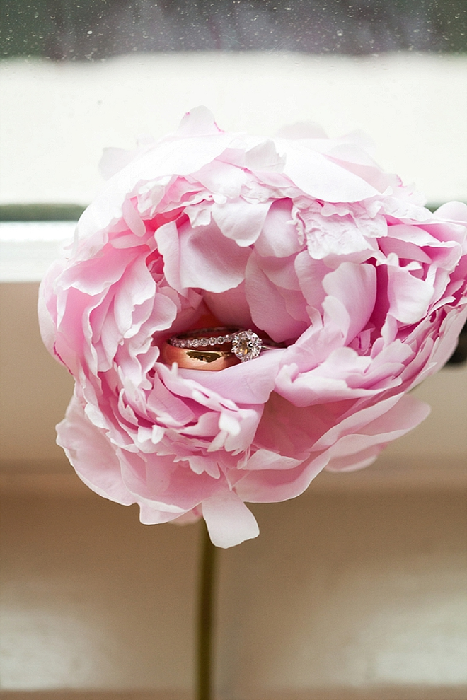 Check out this gorgeous ring shot in a garden rose - SWOON!