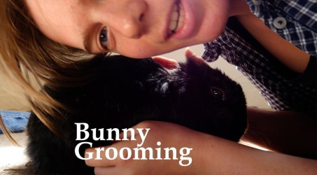 Bunny Grooming. Grooming a 13 Year Old Rabbit.