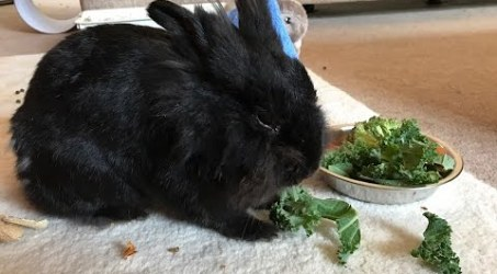 Everybody's Talking – and Singing to Megan the Rabbit.