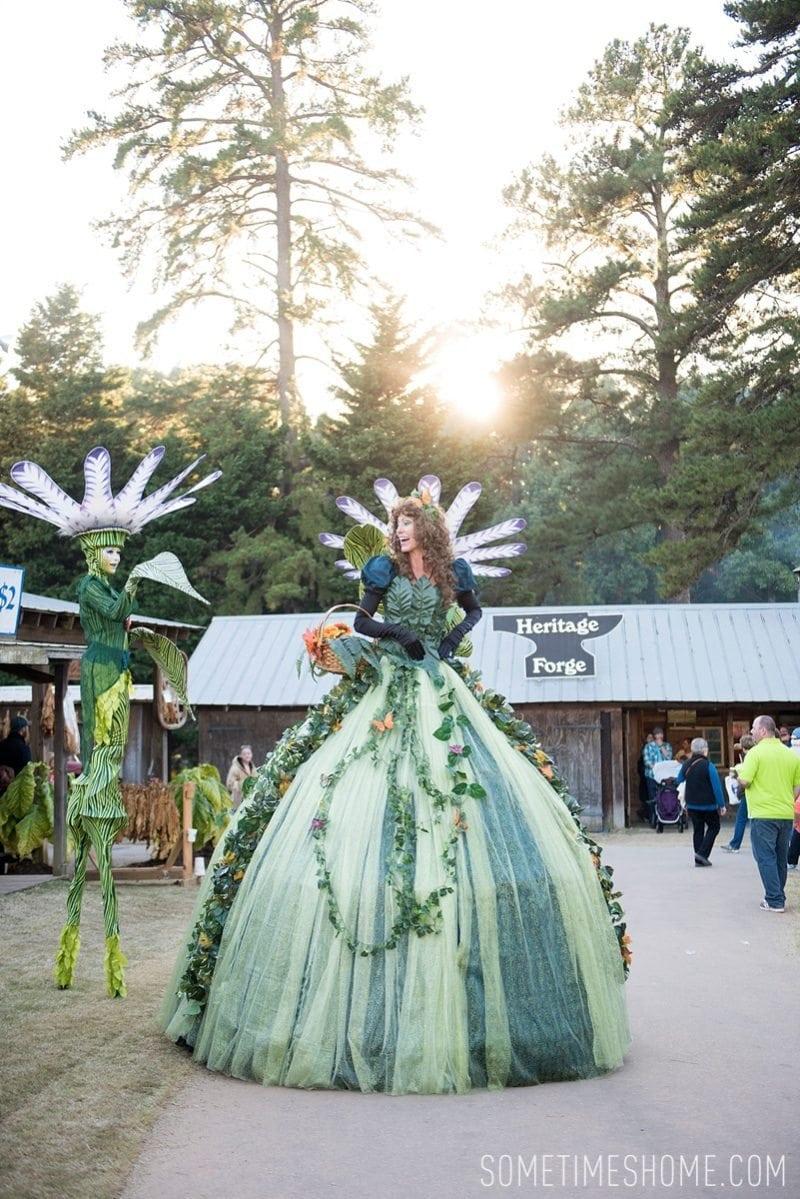 Roses In Garden: North Carolina State Fair Photos