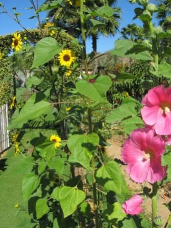 Flora Farms: Garden Flowers