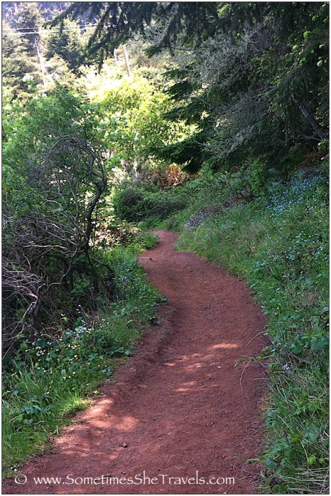 Almost at the junction with the Steep Ravine Trail, here the Dipsea is lined with tiny forget-me-nots