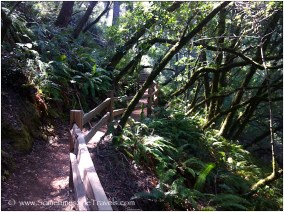 Hiking trail with railing through forest